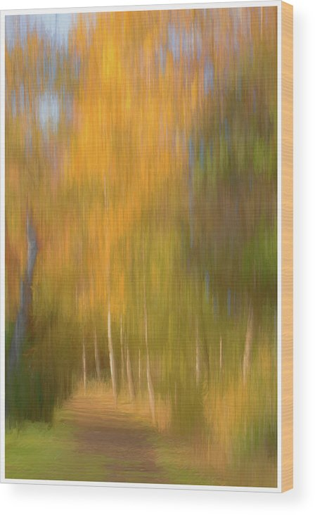 Abstract Wood Print featuring the photograph Woodland Walk by John Fotheringham