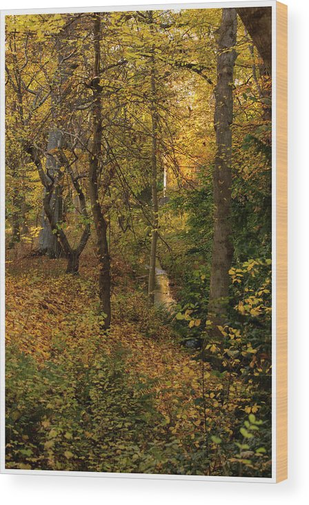 Nature Wood Print featuring the photograph yellow Carpet by John Fotheringham