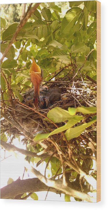 Bird Wood Print featuring the photograph Mockingbird Chick by Nelson Pace
