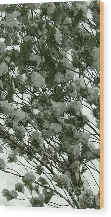 Background Wood Print featuring the photograph Pine Tree Branches Covered With Snow by Jeelan Clark