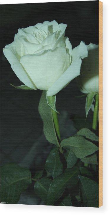 Wood Print featuring the photograph Rose For You by Gornganogphatchara Kalapun