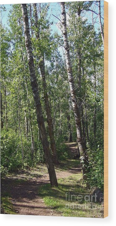 Nature Wood Print featuring the photograph Summer Trail by Jim Sauchyn