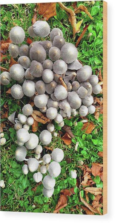 Mushroom Wood Print featuring the photograph Autumn Mushrooms by Nareeta Martin