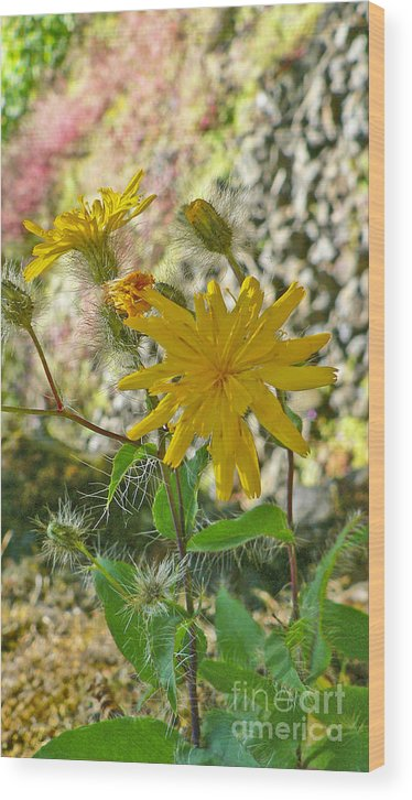 Flowers Wood Print featuring the photograph Fuzzy by Larry Keahey