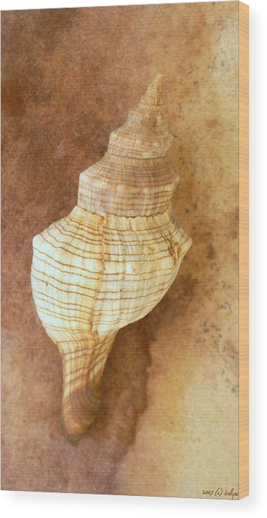 Still Life Wood Print featuring the photograph Sounds Of The Sea by Holly Kempe