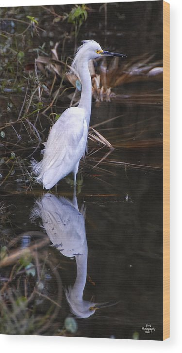 White Egret Wood Print featuring the photograph White Egret And Reflection by Peg Runyan