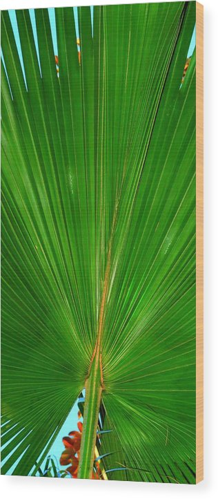 Palm Wood Print featuring the photograph Palm Closeup by Linda Covino