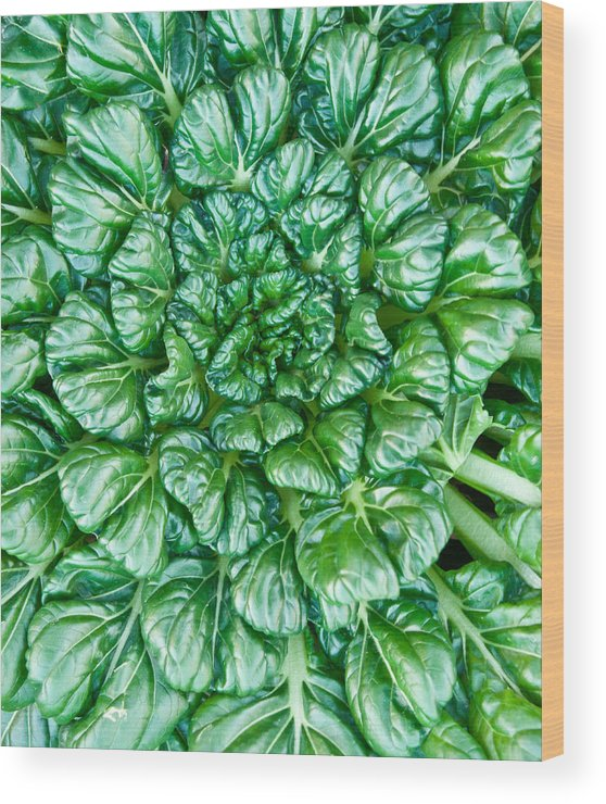 Glabrous Wood Print featuring the photograph Glabrous Leaves by Douglas Barnett