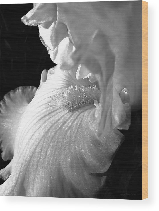 Iris Wood Print featuring the photograph Iris Flower In Black And White by Jennie Marie Schell