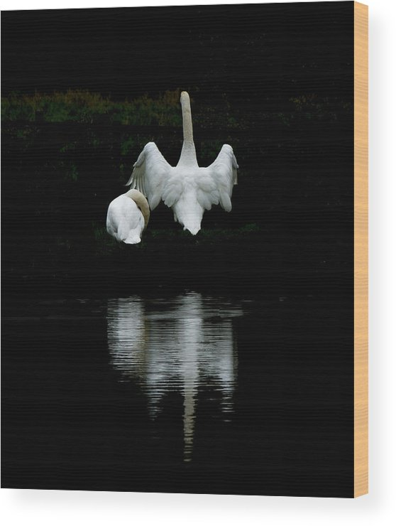 Wildlife Nature Wood Print featuring the photograph Under Cover 2 by Moments In Time Photographics