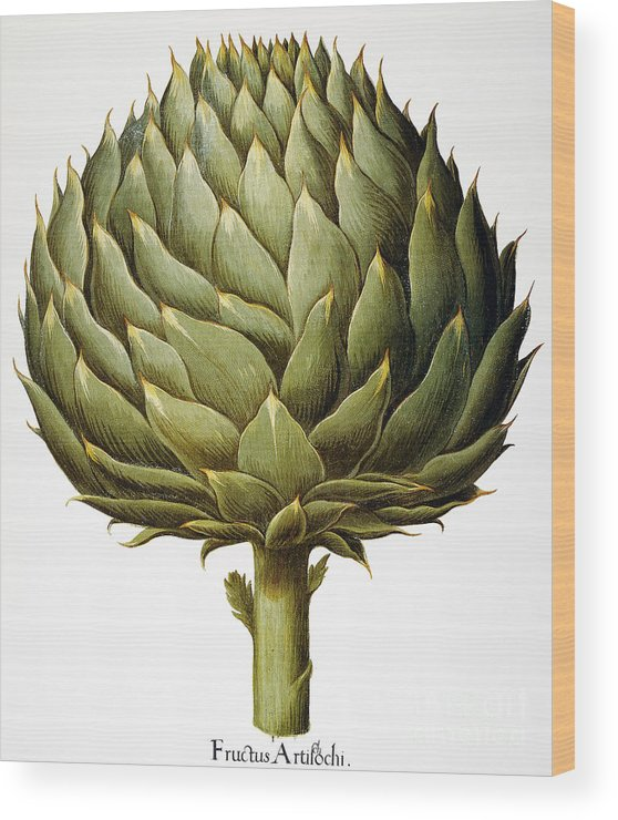 1613 Wood Print featuring the photograph Artichoke, 1613 by Granger