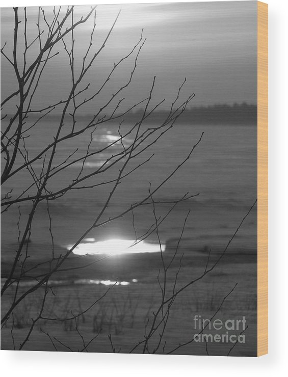 Black And White Sunset Over Lake Michigan Wood Print featuring the photograph Branching Out by Scott Heister