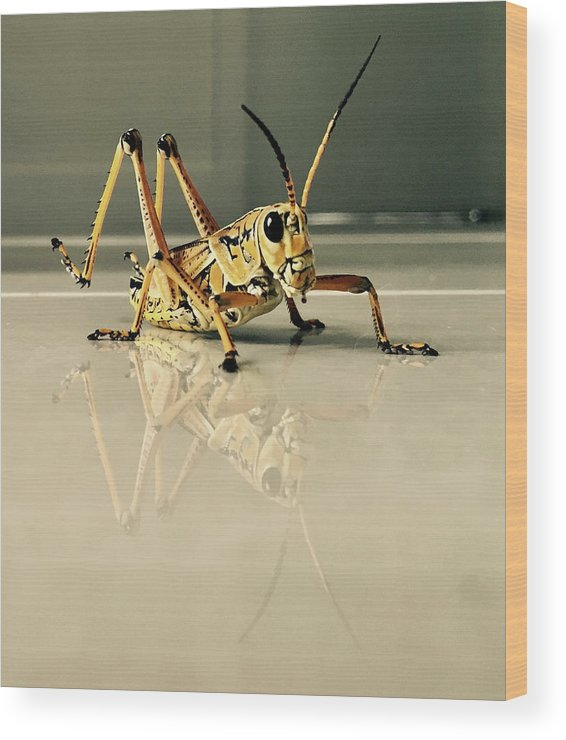 Grasshopper Wood Print featuring the photograph Hi There by Iryna Oliinyk