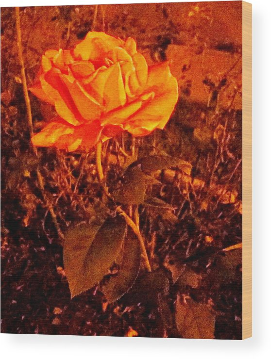 Rose Wood Print featuring the photograph Night Bloomer by Abby Humphries