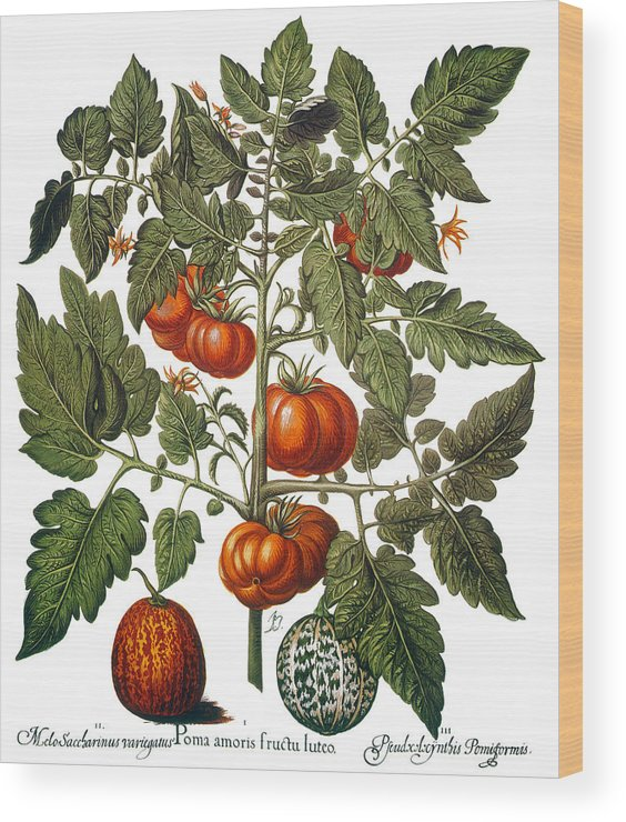 1613 Wood Print featuring the photograph Tomato & Watermelon 1613 by Granger