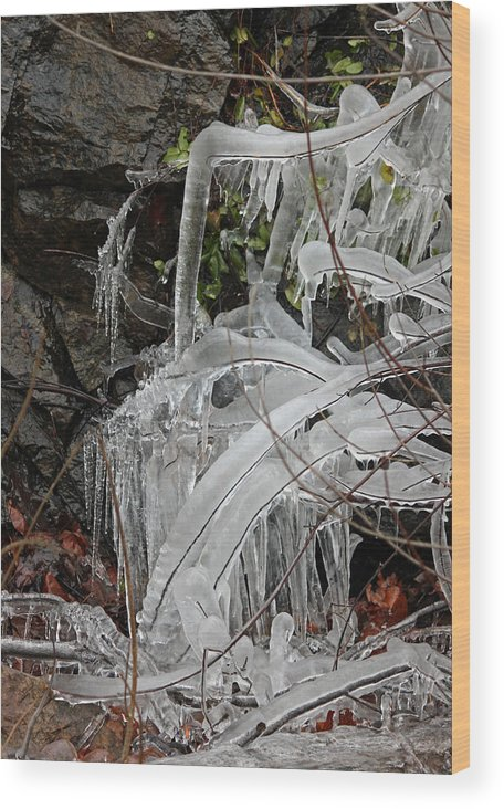 Frozen Wood Print featuring the photograph Frozen V by Suzanne Gaff