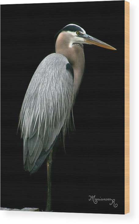 Heron Wood Print featuring the photograph Great Blue Heron by Mariarosa Rockefeller