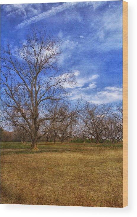 Tree Wood Print featuring the photograph Bare Pecan Trees by Kim Hojnacki