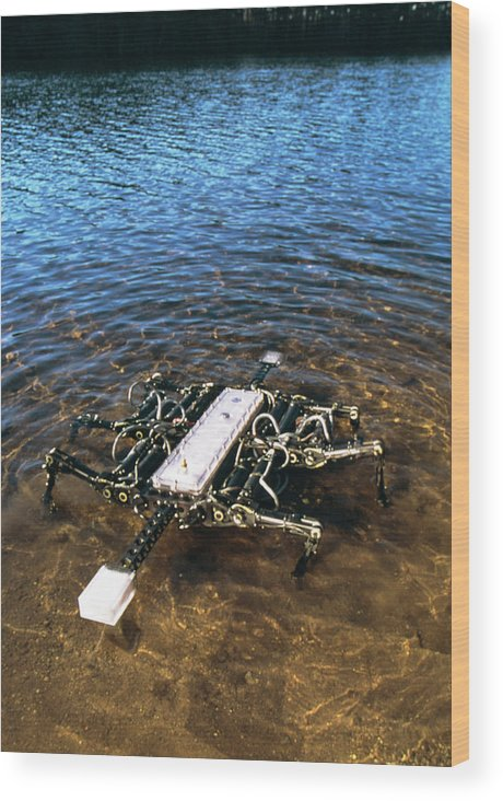 Robot Wood Print featuring the photograph Crab Robot by Peter Menzel/science Photo Library