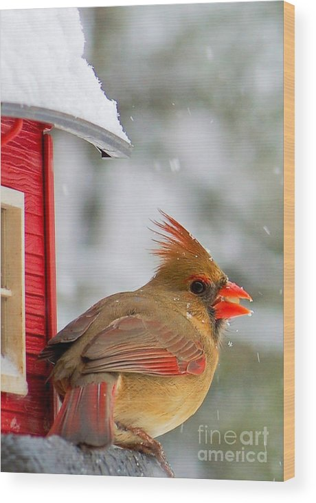 Animal Photographs Wood Print featuring the photograph Female Cardinal In The Snow by Karen English