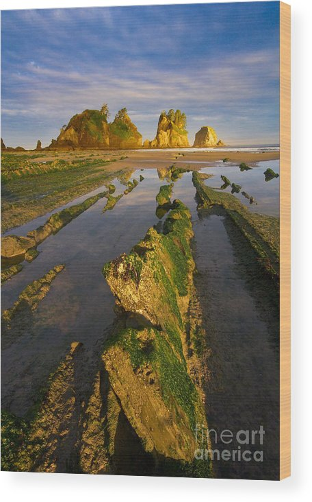 Landscape Wood Print featuring the photograph Fins by Don Hall