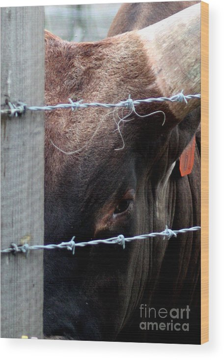 Bull Wood Print featuring the photograph Guarding The Fence V3 by Lauren Nicholson