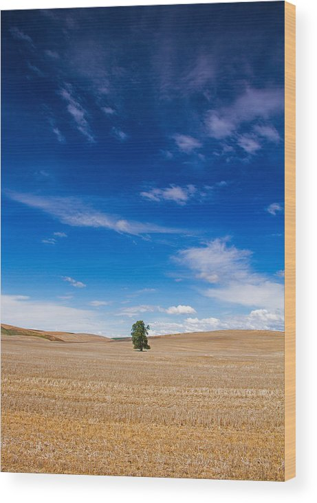 Palouse Wood Print featuring the photograph Solitude by Kunal Mehra