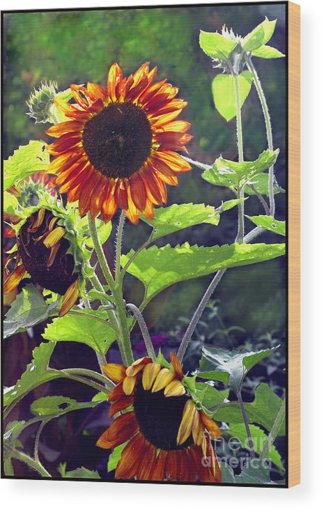 Nature Wood Print featuring the photograph Sunflowers In The Park by Madeline Ellis