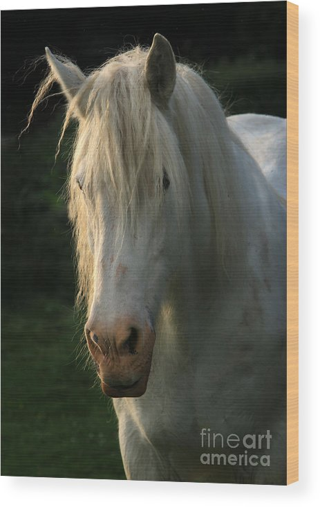 Unicorn Wood Print featuring the photograph The Light In The Mane by Angel Ciesniarska