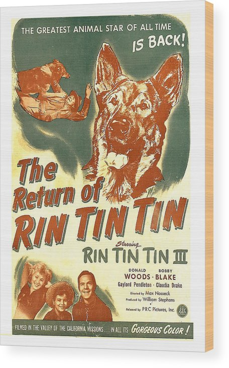 1940s Movies Wood Print featuring the photograph The Return Of Rin Tin Tin, Us Poster by Everett