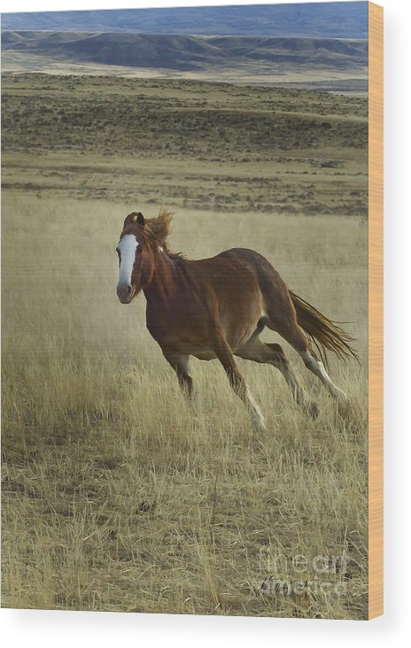 Horse Wood Print featuring the photograph Wild Horse Running-signed-#7273 by J L Woody Wooden