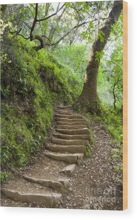 Woodland Wood Print featuring the photograph Woodland Stairs by Juan Romagosa