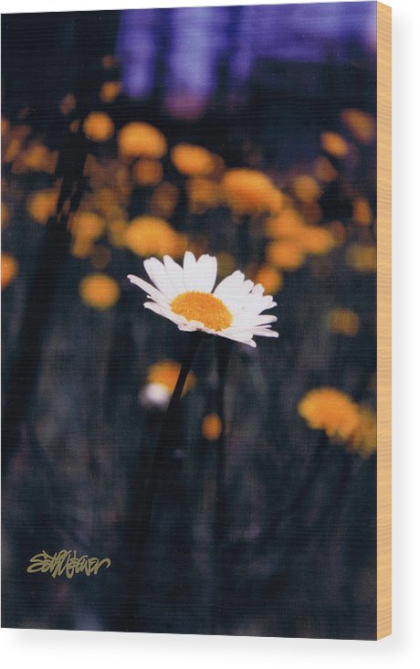 A Daisy Alone Wood Print featuring the photograph A Daisy Alone by Seth Weaver