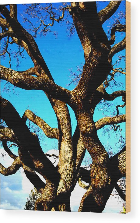 Surrealism Wood Print featuring the photograph Knarled Oak Tree by James Harper