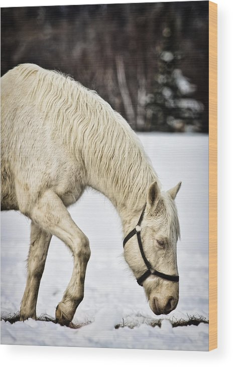 Horse Wood Print featuring the photograph A Walk In The Snow by Gary Smith