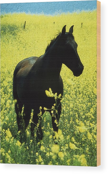 Ireland Wood Print featuring the photograph County Tipperary, Ireland Horse In A by Richard Cummins