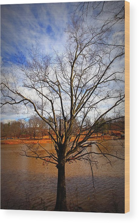 Tree Wood Print featuring the photograph Glorious Tree by Sheila Kay McIntyre