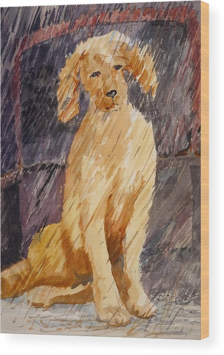 Watercolor Wood Print featuring the painting Rudy In The Rain by Barbara Torke