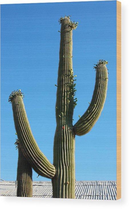 Saguaro Wood Print featuring the photograph Saguaro by Heather S Huston