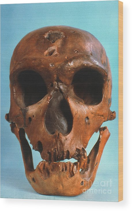 Ancient Wood Print featuring the photograph Neanderthal Skull by Granger