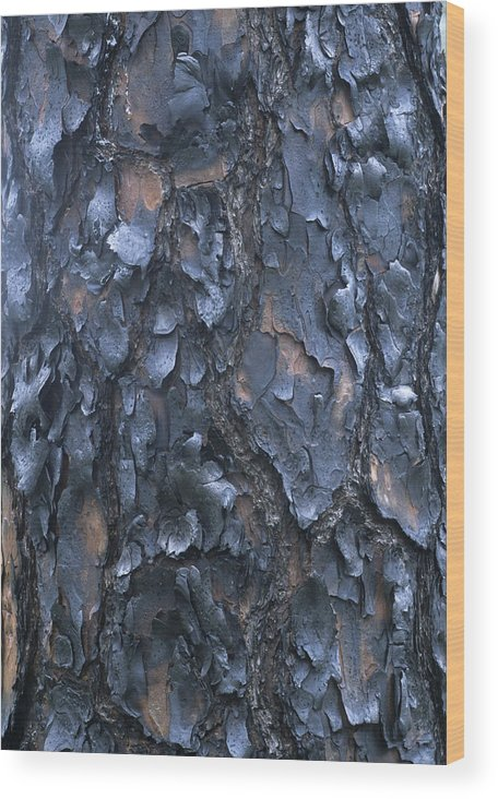 Georgia Wood Print featuring the photograph A Fire Scarred Tree Trunk Whose Thick by Taylor S. Kennedy