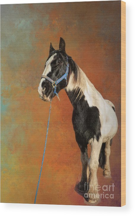 Gypsy Horse Wood Print featuring the photograph Awesome Gypsy Horse by Elisabeth Lucas