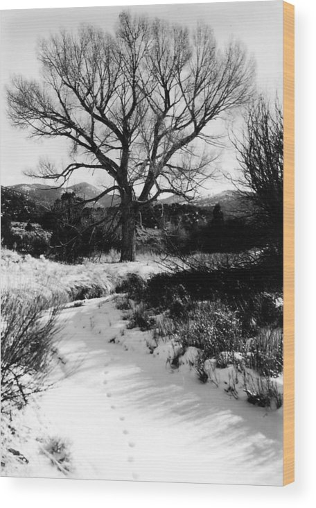 Landscape Wood Print featuring the photograph Creekside Winter by Allan McConnell