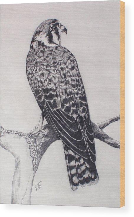 Hawk Wood Print featuring the drawing Desert Hawk II by Suzette Kallen