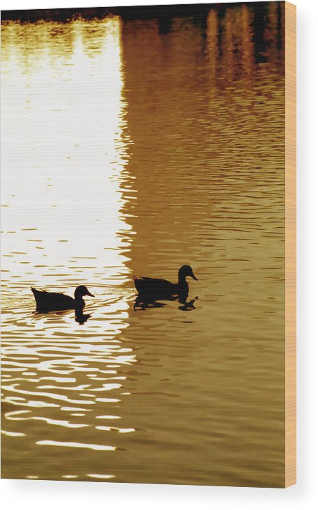 Silhouettes Wood Print featuring the photograph Ducks On Pond 2 by Steve Ohlsen