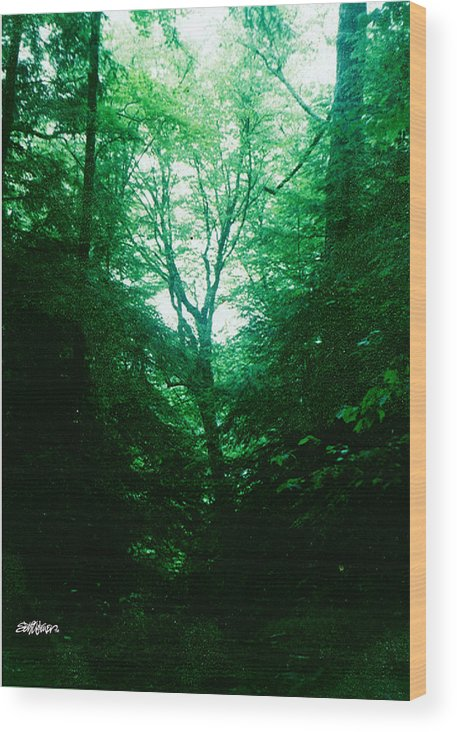 Emerald Wood Print featuring the photograph Emerald Glade by Seth Weaver