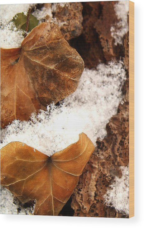 Fall Wood Print featuring the photograph Fall And Winter by Gaby Swanson