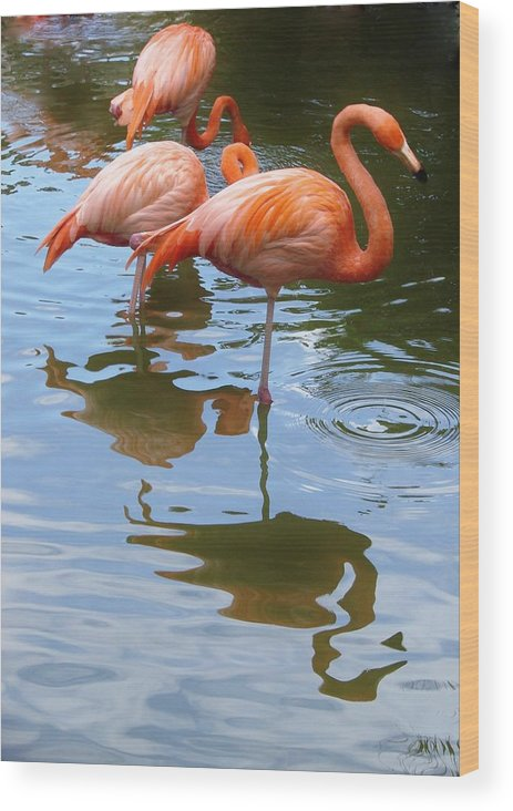 Flamingo Wood Print featuring the photograph Flamingo Reflections by Margaret Bobb