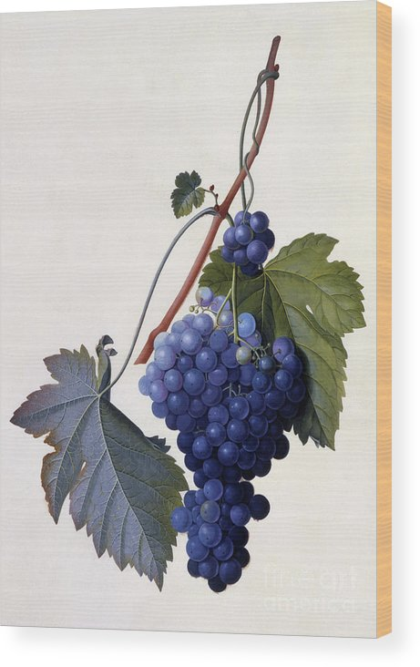 Grape Wood Print featuring the painting Grapes by Georg Dionysius Ehret