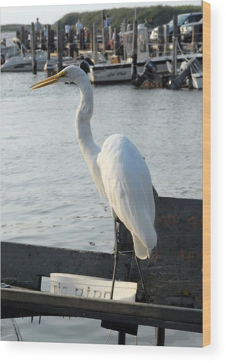 Great Egret Wood Print featuring the photograph Great Egret 25 by Joyce StJames